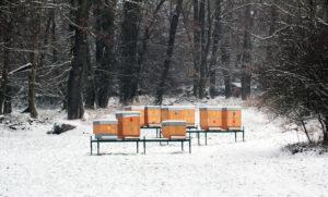 Bienenfreundliches Pflanzenlexikon